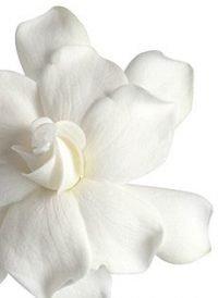 Gardenia Wedding Paper