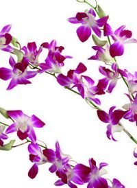 Orchids Wedding Paper